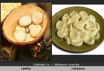 Сранные грибы напомнили тарелку с галушками