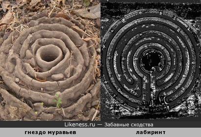 Гнездо муравьев похоже на лабиринт