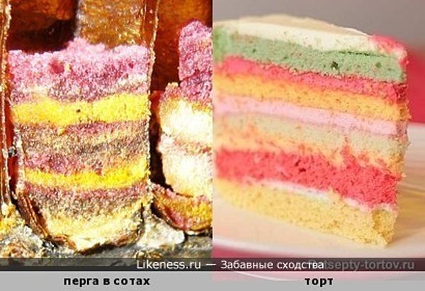 Хитрые пчелы запасают на зиму не только мёд, но и тортики )