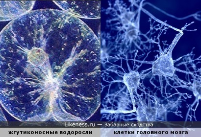 Умные водоросли