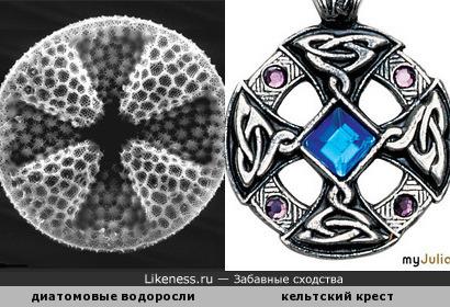 Диатомовые водоросли и христианский символ