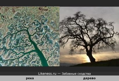 Река в Испании ( вид из космоса ) похожа на дерево