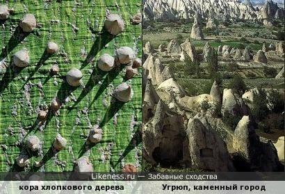 """Кора хлопкового дерева напомнила """"каменный город"""