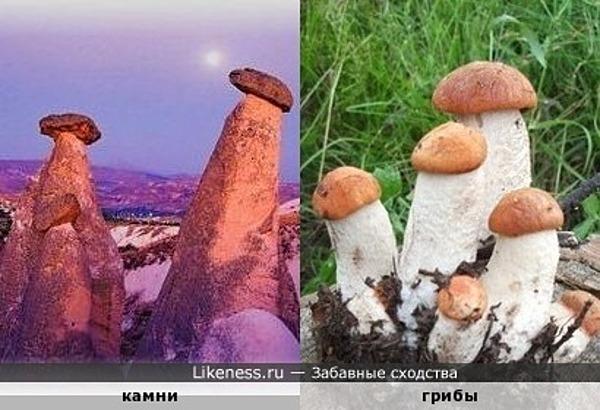 Каменные грибочки