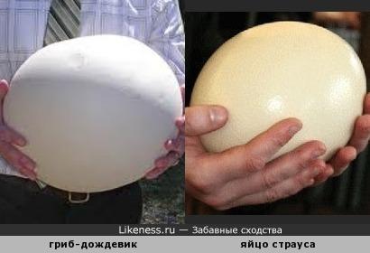 Грибок и яйцо