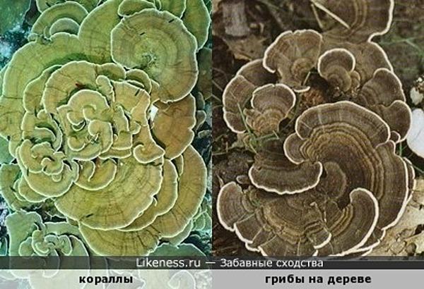 Кораллы похожи на древесные грибы