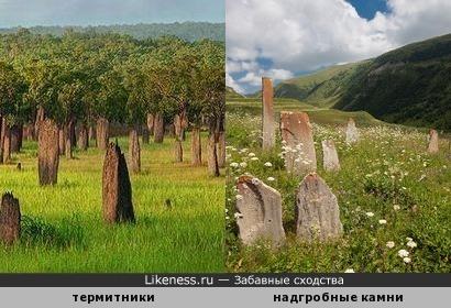 Термитники на поляне напоминают старые надгробные камни