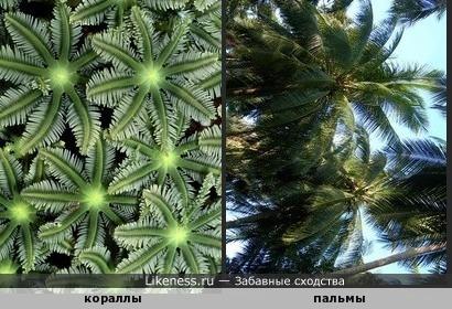 Подводные пальмы