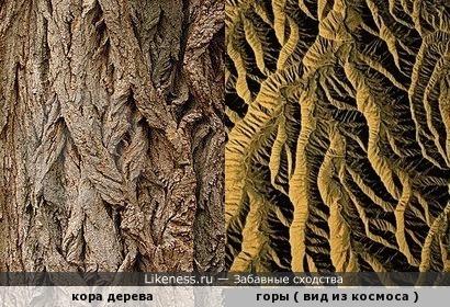 Горы на фото из космоса напоминают кору дерева
