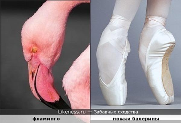 Голова фламинго напоминает ножку балерины