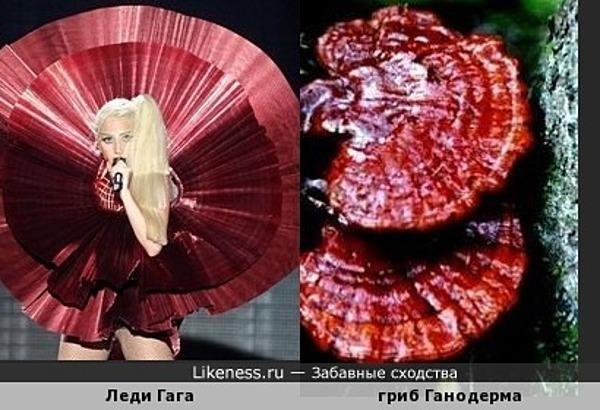 Снова Гага и снова грибы... )