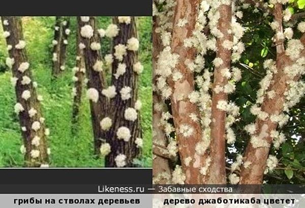 Иногда и деревья бывают белыми и пушистыми