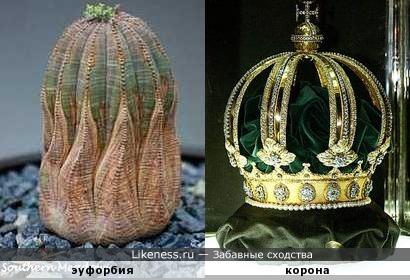 У природы есть всё, даже своя корона )