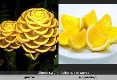 """Непонятные, но настоящие! Цветы напоминают конструкцию из мармелада """"лимонные дольки"""""""