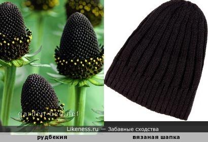 Зачем шапочку вязать, когда её можно просто вырастить!