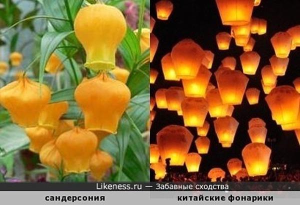 Полет живых китайских фонариков