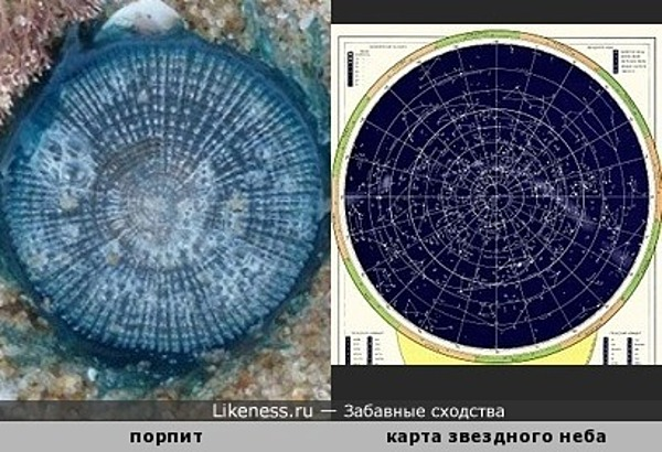 Порпит напомнил карту звездного неба