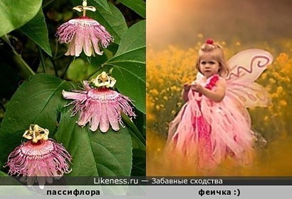 Маленькие танцующие цветочные феи )