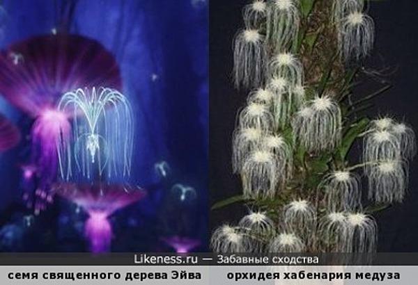 Всегда было подозрение, что у орхидей внеземное происхождение... )