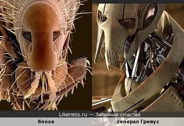 """Блоха под микроскопом напомнила генерала Гривуса из фильма """"Звездные войны"""""""
