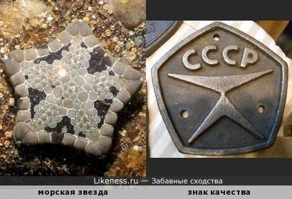 Морская звезда похожа на советский знак качества