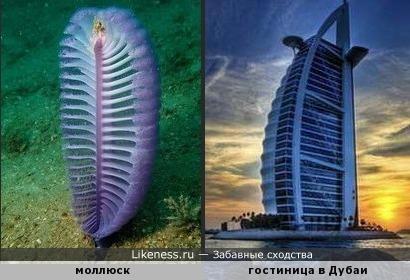 Морской моллюск напомнил гостиницу Парус в Дубаи