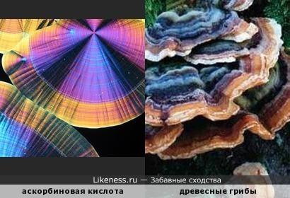Кристаллы аскорбиновой кислоты напоминают древесные грибы