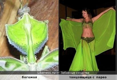 Мода из мира насекомых