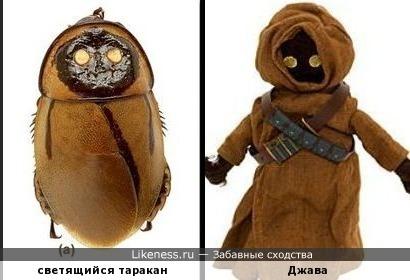 Коротышки из Звездных войн и тараканы с Земли имеют много общего )