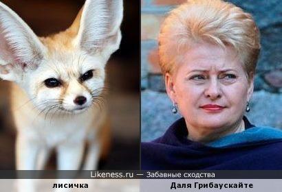 Эта лисичка напомнила Далю Грибаускайте