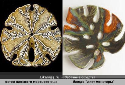 Скелет плоского морского ежа напомнил керамический лист монстеры