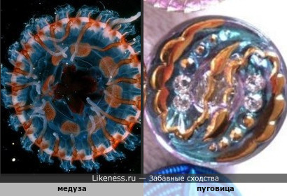 Медуза похожа на пуговицу