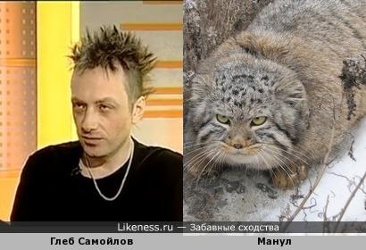 Глеб Самойлов похож на манула
