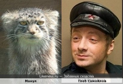 Манул и Глеб Самойлов