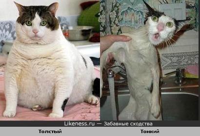 Толстый и тонкий коты похожи