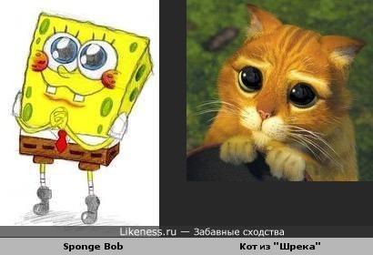 "Sponge Bob похож на кота из ""Шрека"""