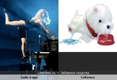Lady Gaga похожа на собачку