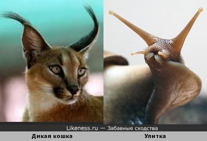 Дикая кошка и Улитка