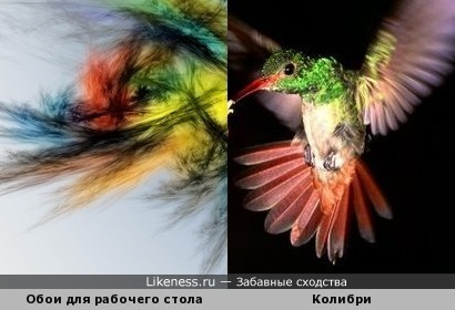 Обои для рабочего стола и колибри