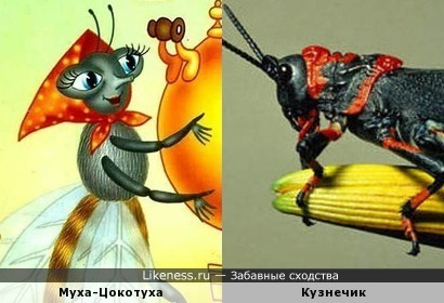 Муха-Цокотуха и вид кузнечиков