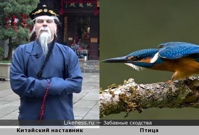 Китайский наставник и птица