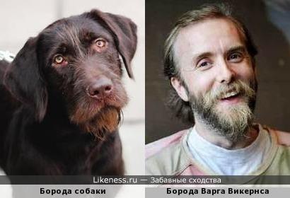 Собака напомнила ту самую фотку с Варгом