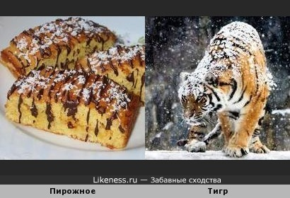 Пирожное в кокосовой стружке напоминает тигра в снегу