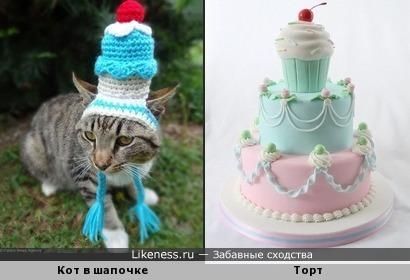 Кот и торт с вишней