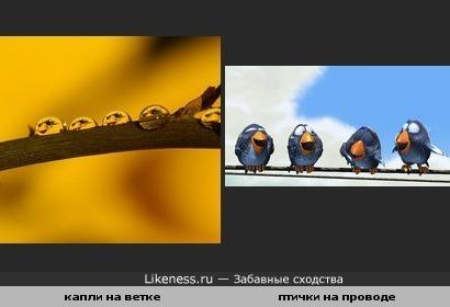 капли похожи на птичек
