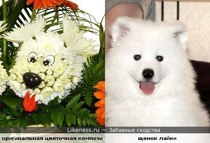 цветочная собачка похожа на щенка