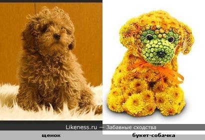 цветочный пес похож на щенка