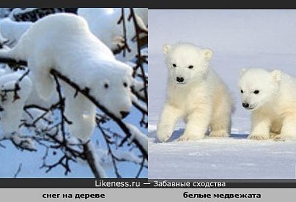 Снег на дереве похож на медвежонка