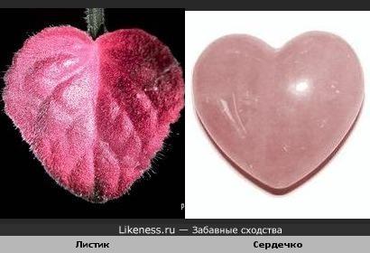 Листик цветка похож на сердечко