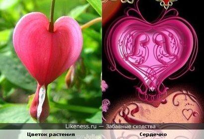 Цветок похож на сердечко